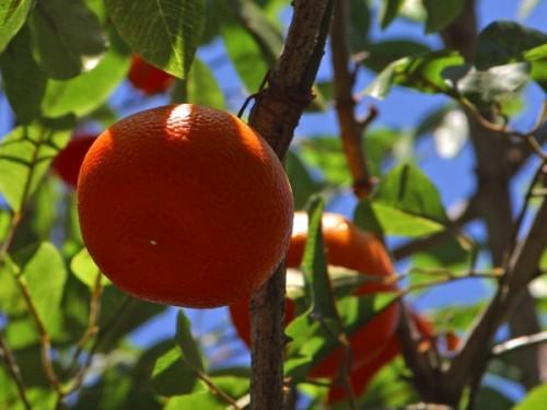 Décembre – Calendrier des Fruits et Légumes