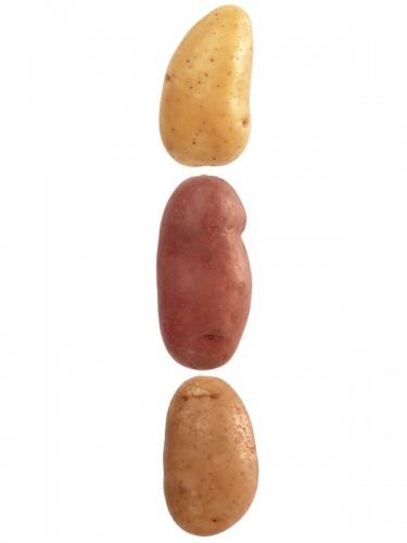 Quelle pomme de terre choisir pour quelle utilisation ?