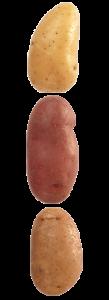 pommedeterre22