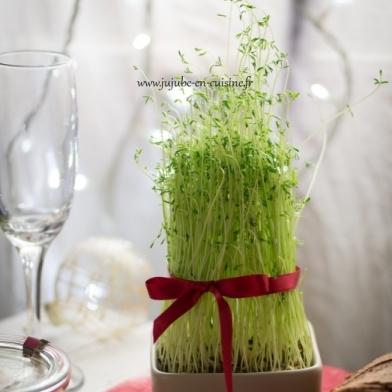 Graines germées de la Sainte Barbe – Tradition Provençale
