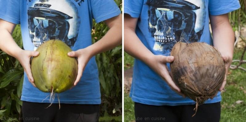 Noix de coco verte et  noix de coco marron