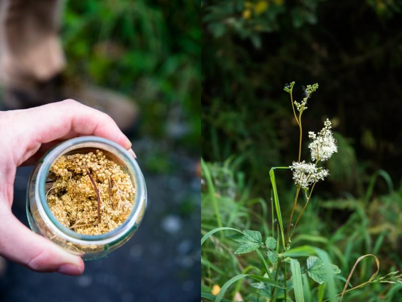Reine-des-prés, Aspirine naturelle (meadowsweet) | Jujube en cuisine