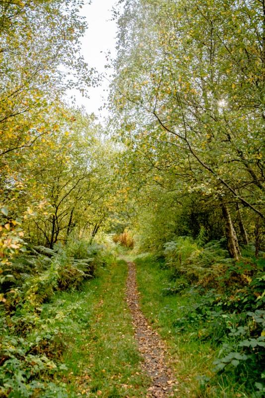 Le petit chemin en forêt qui mène à la tourbière... | Jujube en cuisine