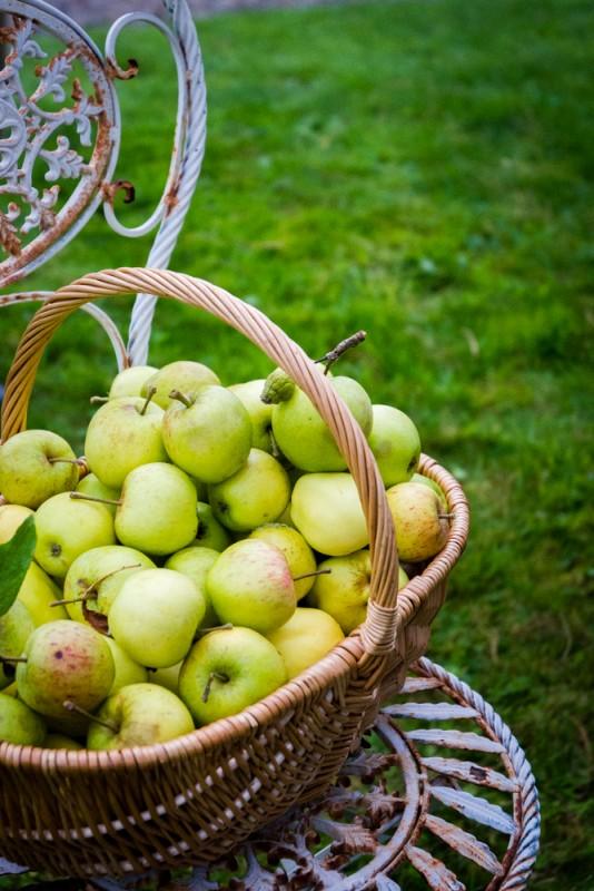 Dégustation des huiles Newgrange Gold | Jujube en cuisine